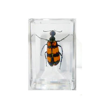 Blister Beetle Paperweight