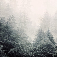 Forest in Fog, Landscape Photography, Rain, Mist, Tree Photograph, Winter, Oregon, Muted Blue Green - Elemental