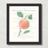 Vintage Apple Collage No. 4 Canvas Print