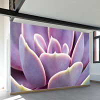 Sunset Succulent Wall Mural