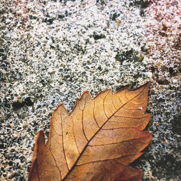 Nature Photography | Abstract Photo | Fall Photography | Fall Art | Autumn | Golden | Neutral | Cement | Leaf | Square Format | Home Decor