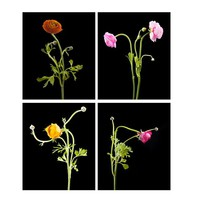 Set of 4 Dancing Flowers  Wall Art Prints, Limited Edition Fine Art Photography ,  Matted Prints, Original Artwork Home Decor