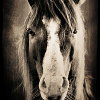personified - horse portrait in sepia - decorative print 8x12 | slightclutter - Photography on ArtFire