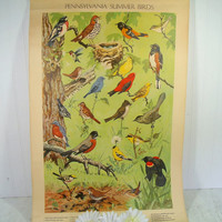 Antique Poster Pennsylvania Summer Birds Litho by Jacob Bates Abbott 1946 - Fourth in Series Distributed by the Pennsylvania Game Commission