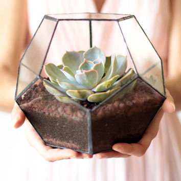 Geometric Glass Terrarium / Dodecahedron / Handmade Glass Terrarium / Modern Planter for Indoor Gardening / Stained Glass Terrarium