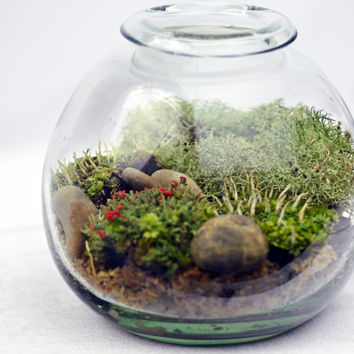 Large Lichen Terrarium // Forest // Glass Vase // Home and Living // Green Gift Ideas // Home Decor// Indoor Garden