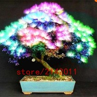 10 seeds bag rainbow albizia julibrissin acacia tree seeds bonsai beautiful flower seeds tree seeds pot plants for home garden