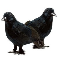 Realistic Looking Halloween Decoration Birds Black Feathered Crows Halloween Prop Décor (2-pack)