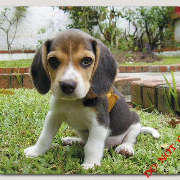 Take Me Home How can you say no to This Face? Let This BEAGLE puppy Brighten Your Day Great gift Dog Mousepad Lover  FREE SHIPPING Adorable