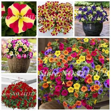 200 Pcs Bonsai Hanging Petunia Seedss Garden Petunia  Mixed Color Potted Perennial Flower Planta Diy Home Garden Plants