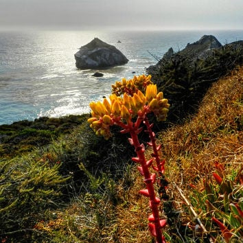 California - Big Sur 006 Photograph by Lance Vaughn - California - Big Sur 006 Fine Art Prints and Posters for Sale