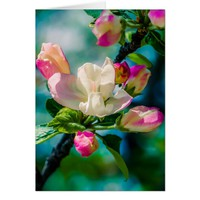 Crabapple flower and buds card