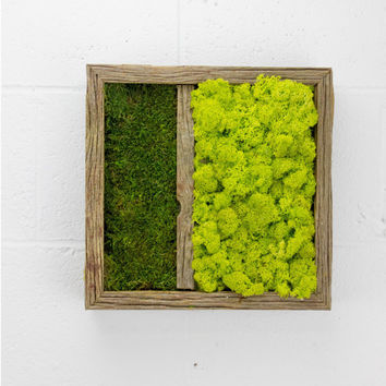 "Twinz -  Water free green wall art, moss and preserved plants - Vertical garden, green wall decor - Moss wall decor - 12""x 12"" Rustic Frame"
