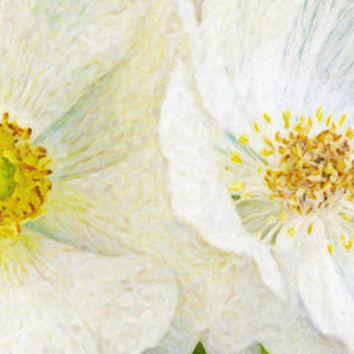 Two White Poppies - Duo of White Flowers - 8X12 Print