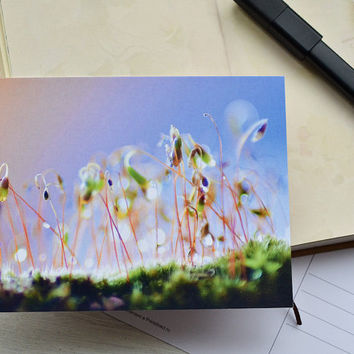 Abstract Moss  Photo Card - 4x6 blank Postcard - Zen Poctcard - Postcrossing Card - Nature Macro  Postcard