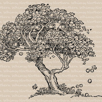 Old Apple Tree Illustration - Vintage Clip Art Image – Autumn Digital Stamp – Printable Transfer Graphic – instant download - CU OK