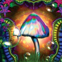 MAGIC MUSHROOMS TRIPPY DIGITAL POSTER ART PRINT AMK481