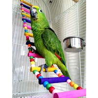 New Arrival Bird Parrot Colorful climbing ladder toy parrot swing toys parrot supplies PTSP