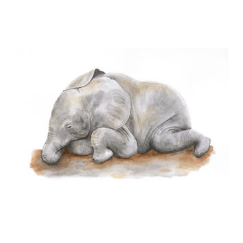 Sleeping Baby Elephant
