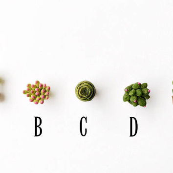 Cactus Magnets, Succulent Magnets, Miniature Succulents, Cactus Figurines, Fridge Magnets, Magnets For Boards, Magnets Set, Arizona Magnets