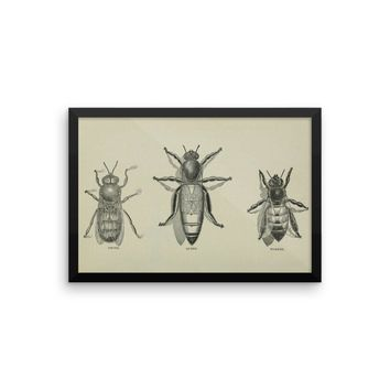 Prime Swarm Vintage Bee Diagram Art Poster