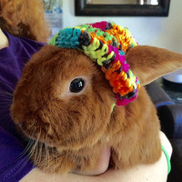 Bunny Beannie Hat for Your Rabbit