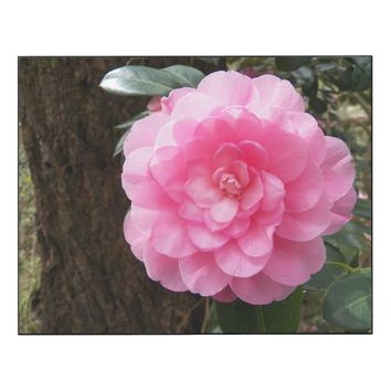 Pink Waterlily Camellia Floral Wood Wall Art