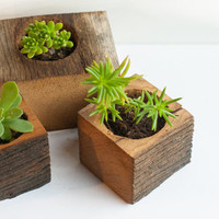 Succulent planter - Planter box - Small wooden planter.