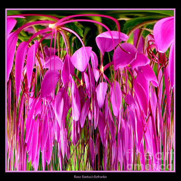 Cleome Flower Abstract Photograph by Rose Santuci-Sofranko - Cleome Flower Abstract Fine Art Prints and Posters for Sale