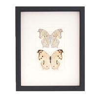 Real Framed Butterfly Art Mother of Pearl Butterfly Specimen Shadow Box Display
