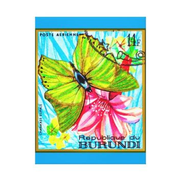 Butterfly Charaxes Eupale Canvas Print