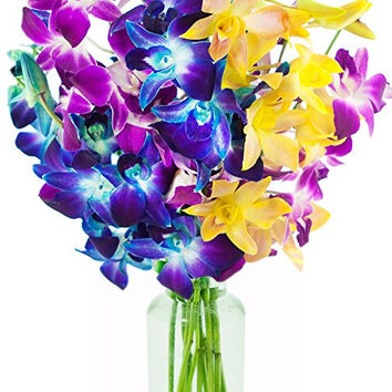 Valentine's Tropical Retreat Orchids: 5 Blue Dendrobium Orchids, 3 Purple Dendrobium Orchids, 2 Yellow Dendrobium Orchids with Vase