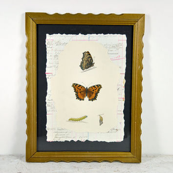 Antique Framed Butterfly Print