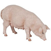 PAPO SOW/PIG