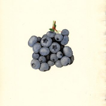 Blueberries, Stanley (1940)