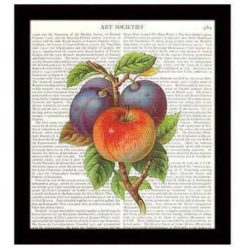 Kitchen Decor Dictionary Art Print 8x10 Apple Plums Fruit Illustration