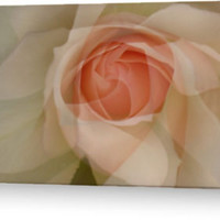 """""""Petals"""" Greeting Cards & Postcards by JUSTART   RedBubble"""