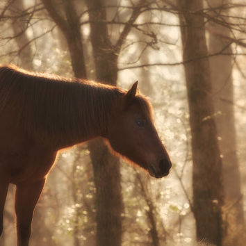 Horse Photography Equestrian Fine Art Print