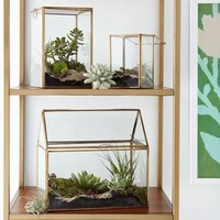 Display Box Terrariums