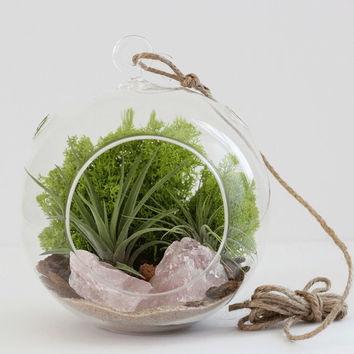 Large Rose Quartz Air Plant Terrarium Kit with Chartreuse Moss
