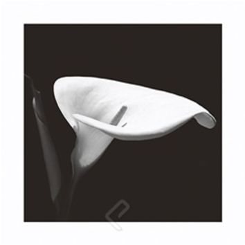 Calla Lily 3 College Dorm Room Poster - Black and white photograph Calla Lily on dorm room perfect poster for decorating girls rooms
