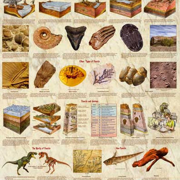 Introduction to Dinosaur Fossils Poster 24x36