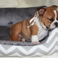 """One-Piece 19"""" X 15""""  - Dog Bed - Cat Bed - Gray & White with Minky Fleece"""