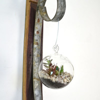 Wall Hanging Terrarium - Round - 100% recycled Wine Barrels
