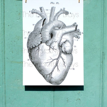 Anatomical heart print anti valentines print - home decor - human anatomy - scientific print - vintage science print - quirky art print - uk