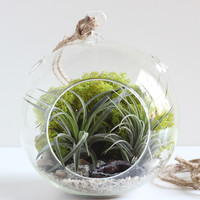 Geode and Pyrite Terrarium Kit with Two Plants and Chartreuse Moss