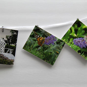 Garden Boxed Note cards, Eight cards with envelopes, Gift Set