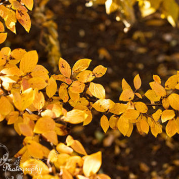 Autumn Golden Yellow Orange Leaves Home Decor 11x14 Fine Art Photography Print Wall