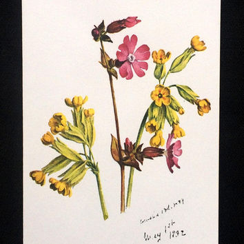 Cowslip and Campion Flowers - Blank Notes Card - Set of 3 Cards - Water Colorist Ellen Stevens - Reproduction of National Trust Painting