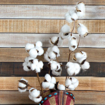Cotton Blossom Stems